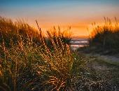Beachant